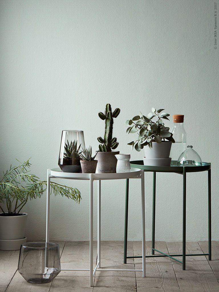 deko in gr n hier wurde die wand passend zu unserem gr nen gladom tisch gestrichen pflanzen. Black Bedroom Furniture Sets. Home Design Ideas