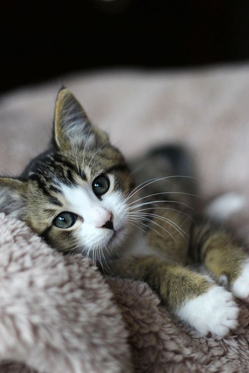 Love Beauty A Wonderful World Cute Animals Animals Kittens Cutest