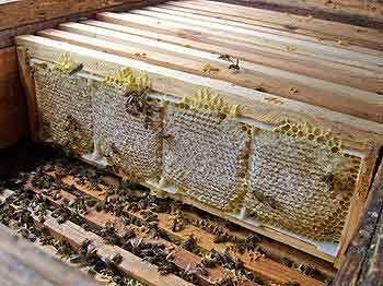 Производства табачных изделии купить чапман сигареты в ижевске