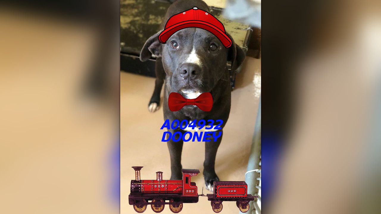 A004932 Dooney Urgent Kill List For Space Clayton County Ac By Partners For Pets Inc The Shelter Pet Project Animal Shelter Quotes Dog Friends