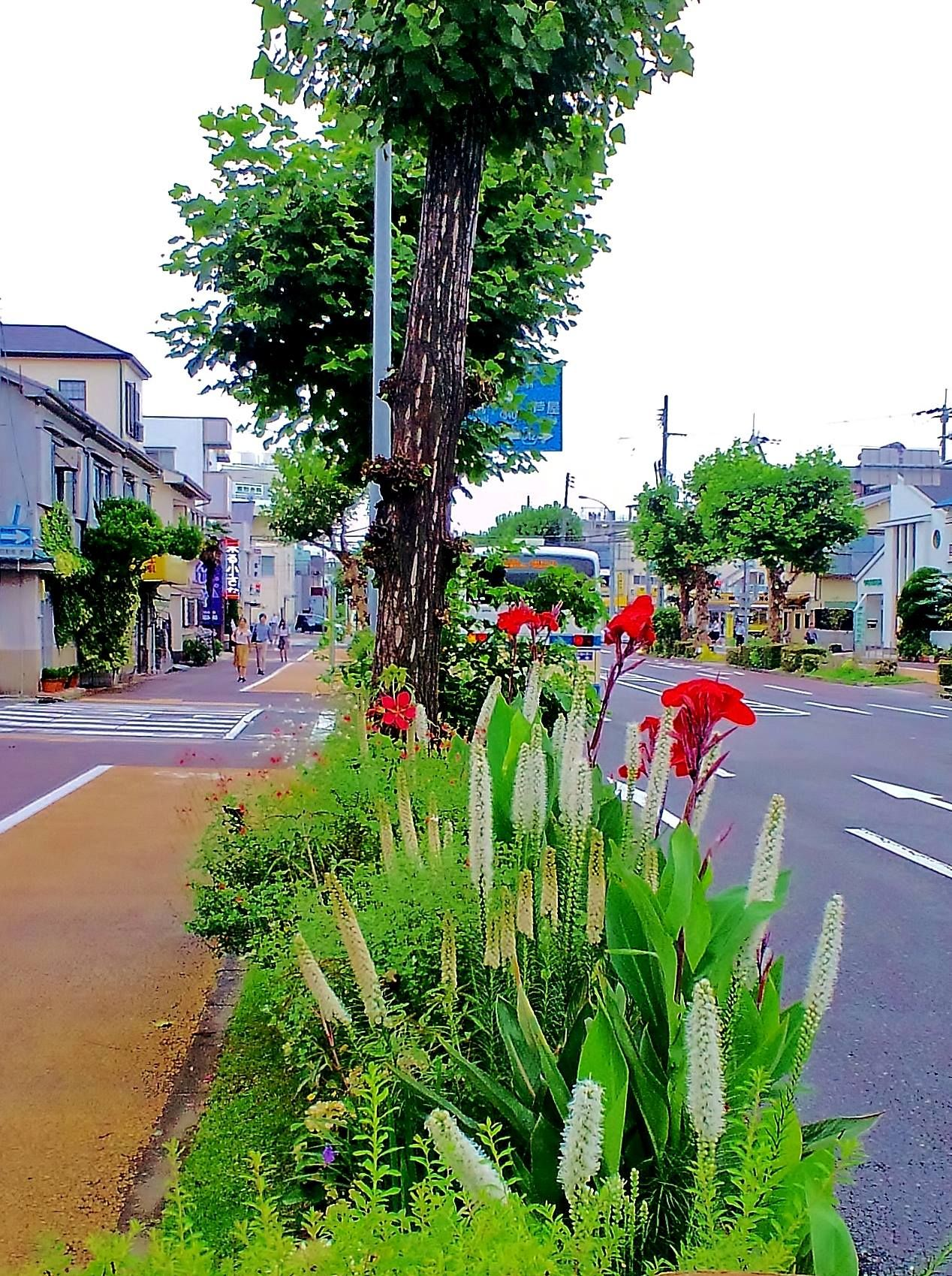 ■ Roadside garden ・・Liatris with Canna・・