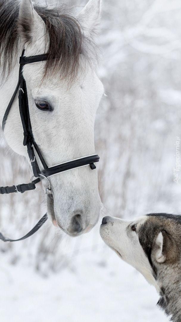 Koń i pies - Tapeta na telefon in 2020 | Konie, Tapeta ...