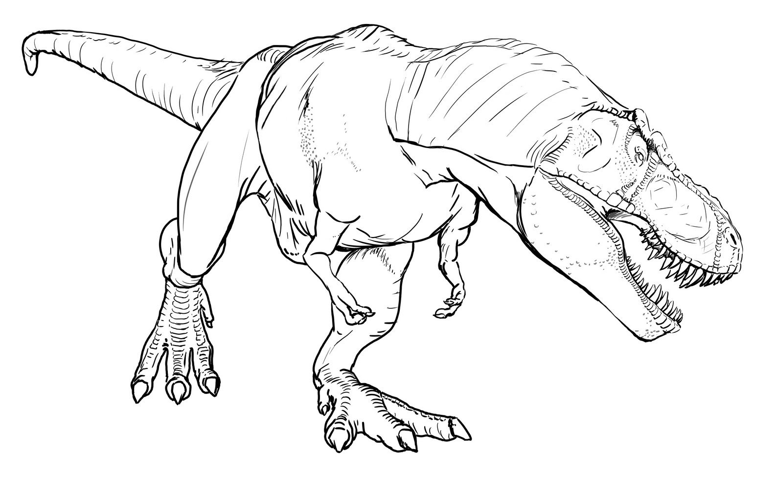 Disegni Da Colorare Dinosauri T Rex • Colorare.best