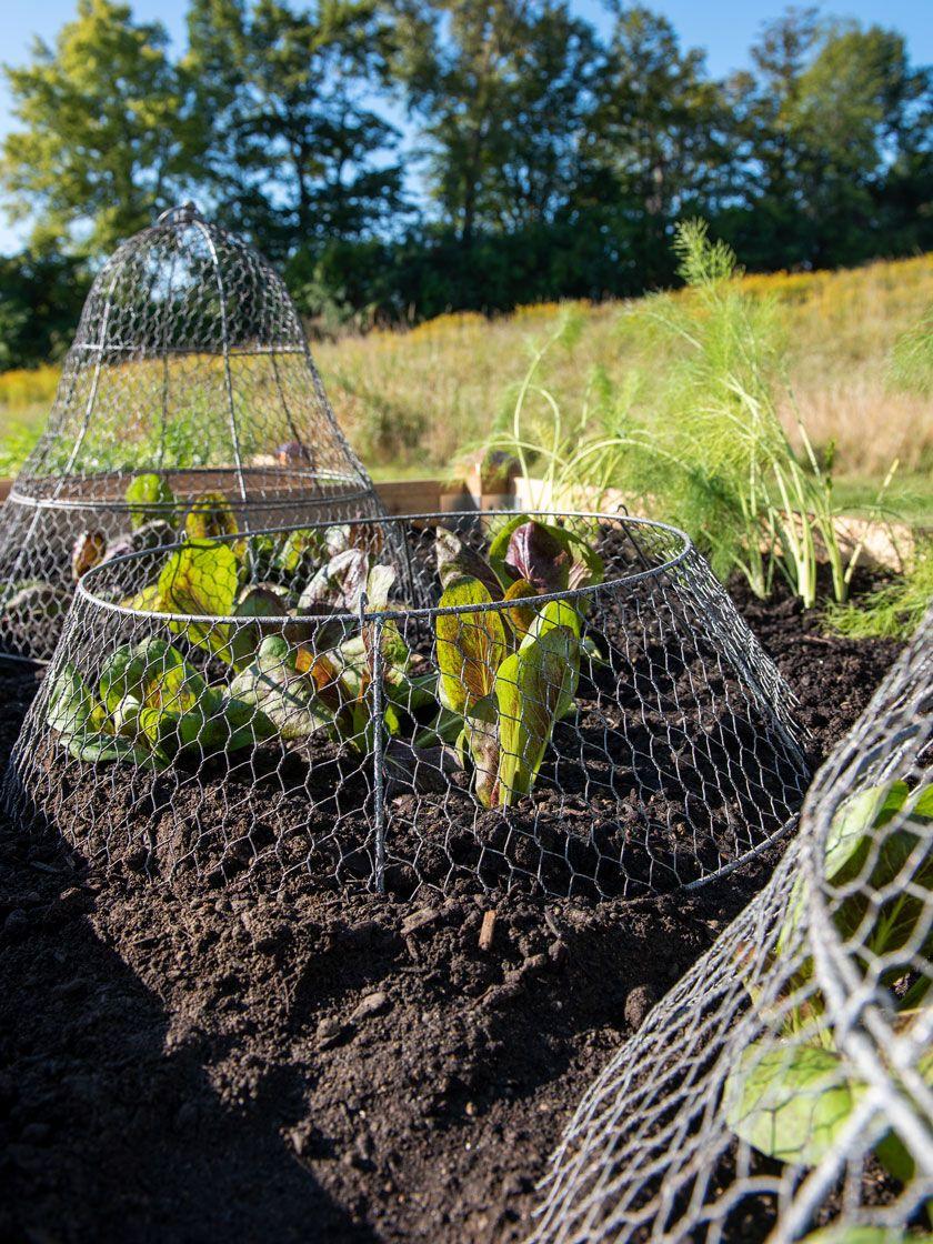 Chicken Wire Cloche Extension Gardener S Supply Chicken Wire