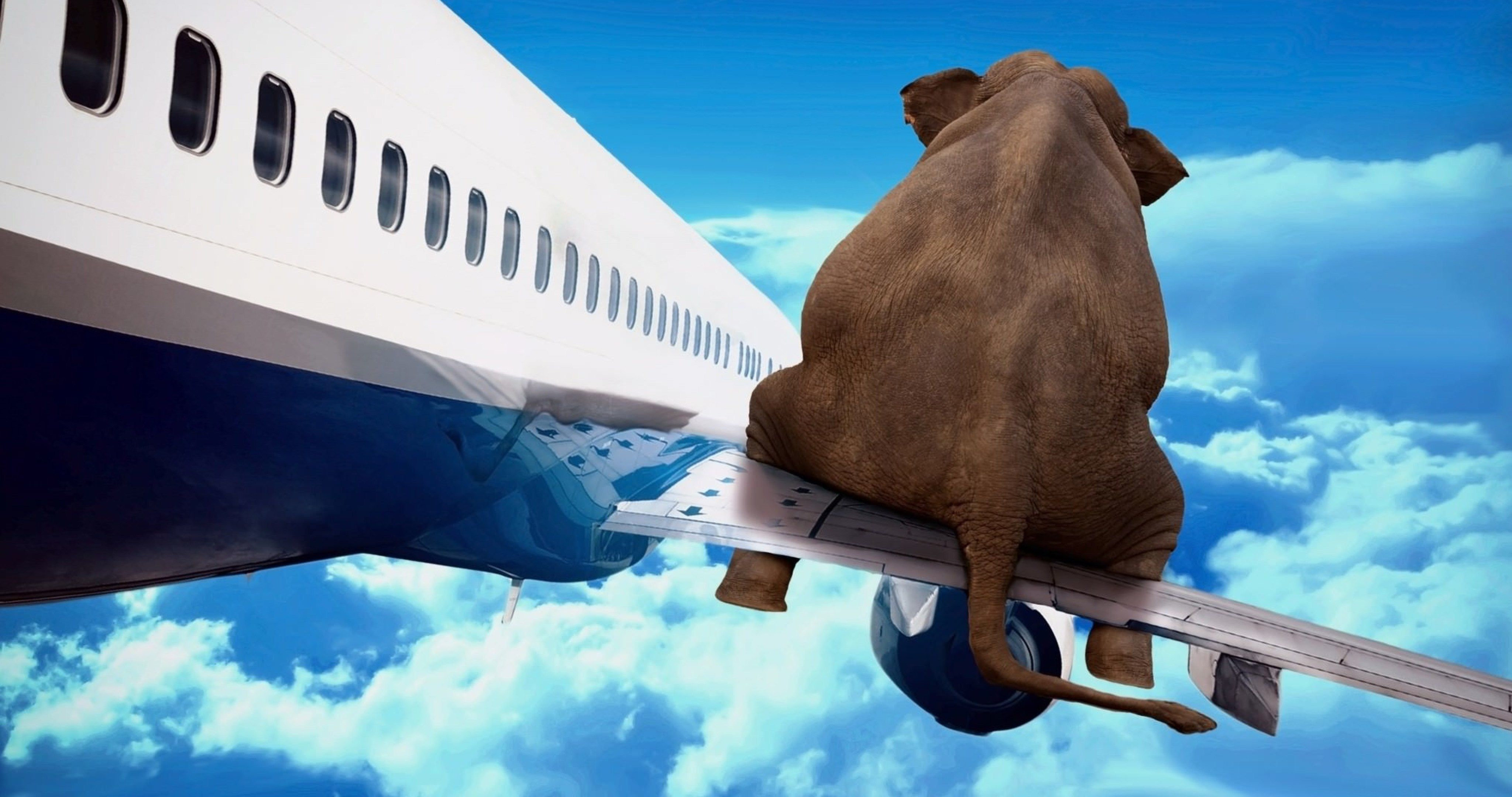 Iphone 7 Wallpapers Hd: Elephant On Airplane Wing 4k Ultra Hd Wallpaper