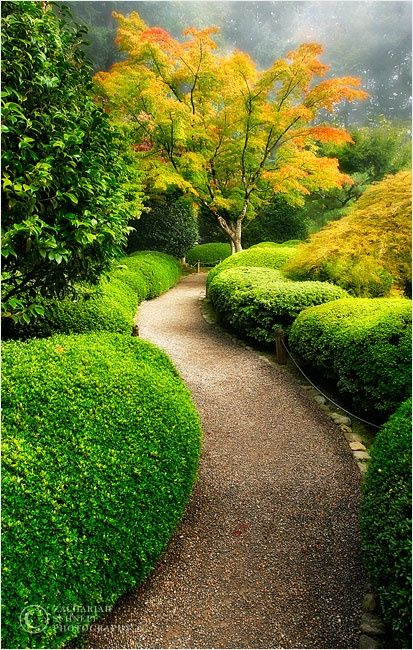 va en la h de hermoso #Megaplush Jardín Pinterest Jardinería