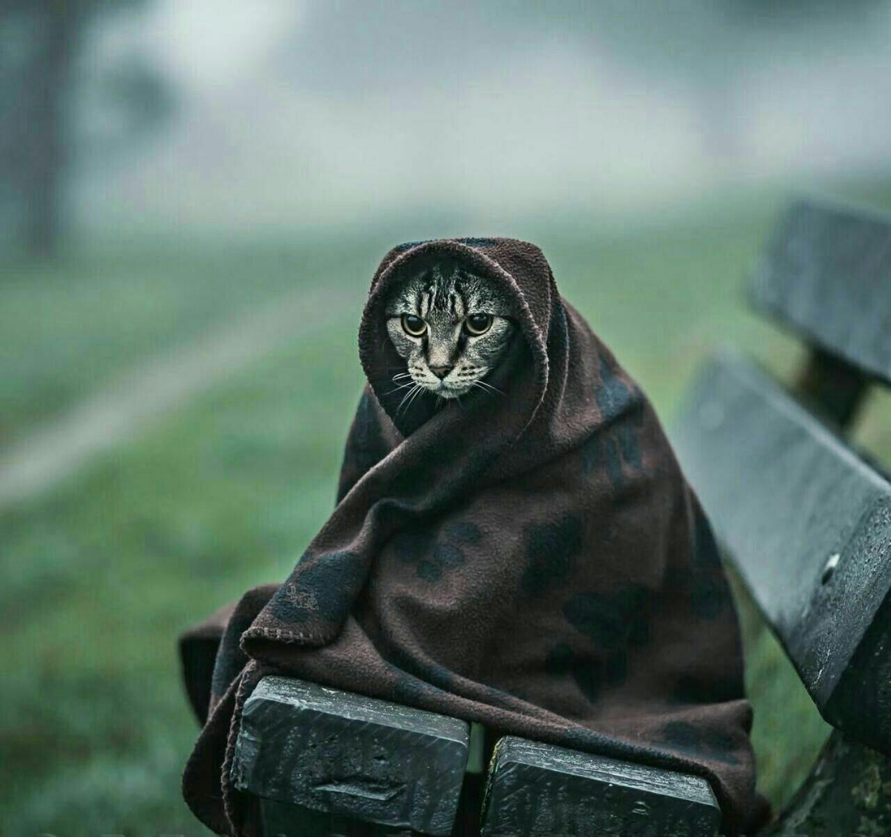 Blanket Wrapped Cat Waiting For The Bus Near Rose Cottages And Gardens Britain Kittens Cats Of Instagram Cats