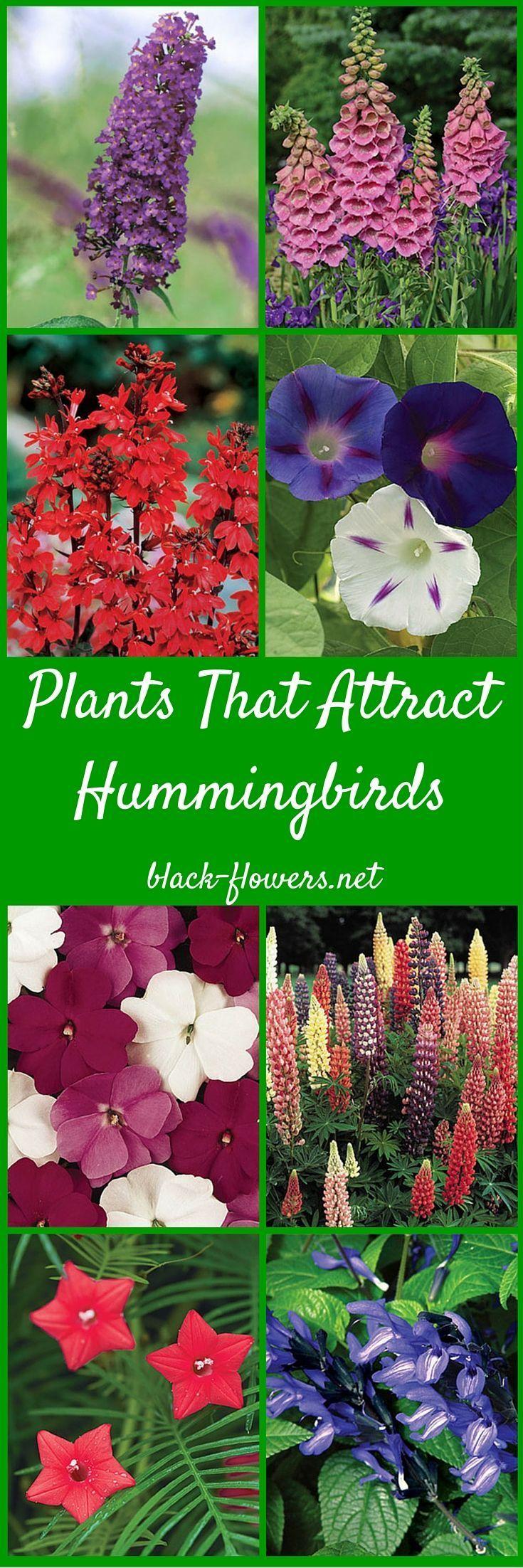 Landscape flower garden  Plants That Attract Hummingbirds  information about plants