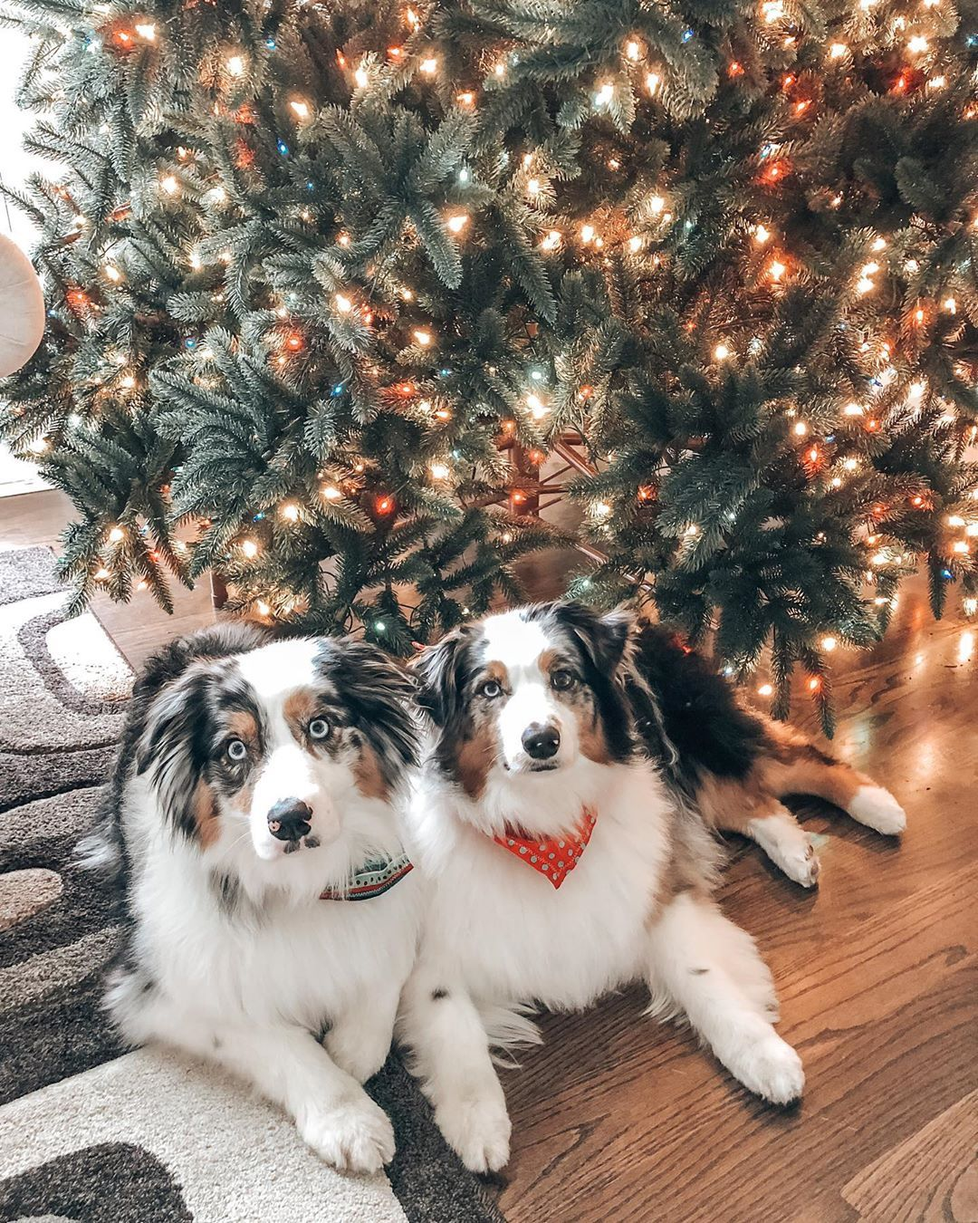 Holiday Pet Photo By Holidae_and_bailey Who Tagged Us On
