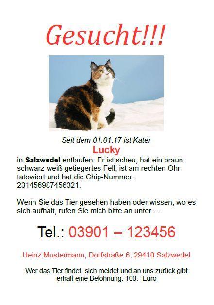 Bildergebnis Fur Katze Vermisst Suchplakat Vorlage Katzen Katzen Zubehor Katze Vermisst