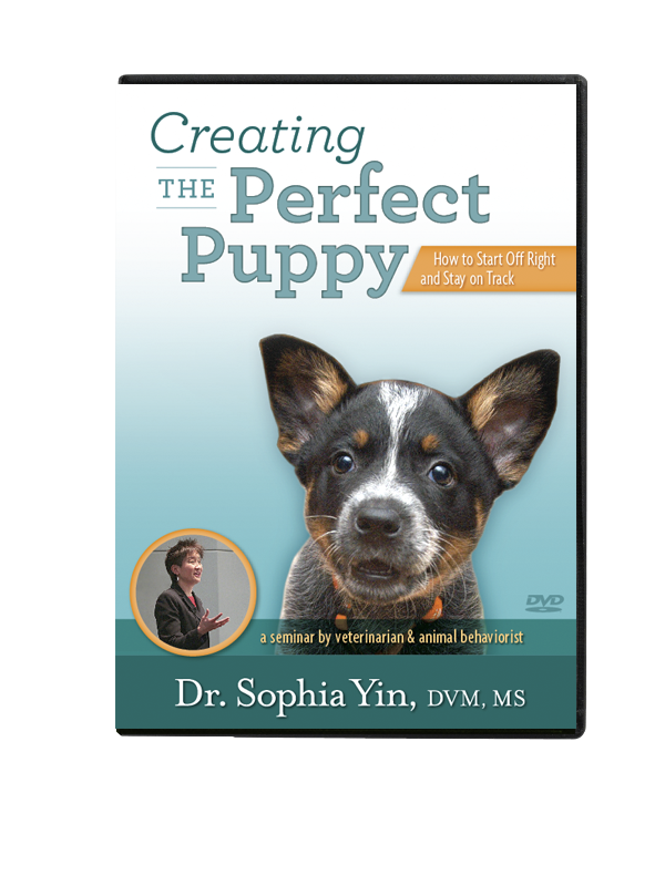 Creating The Perfect Puppy Dvd Preorder Puppy Whining At Night Puppies Puppy Whining