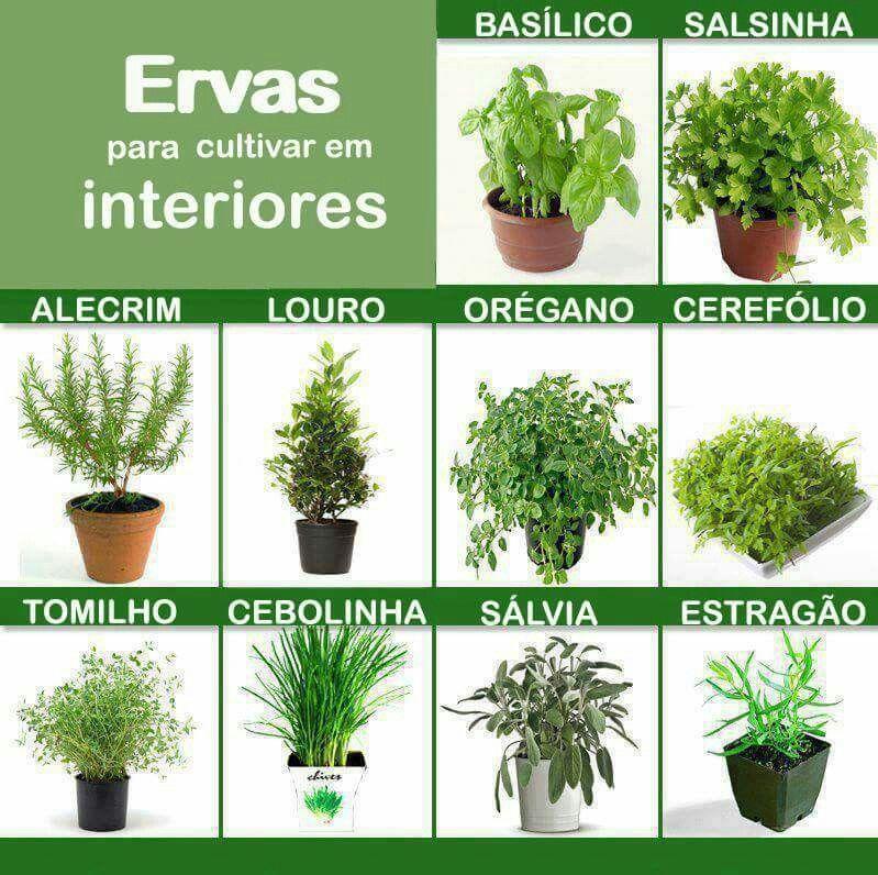 Ervas arom ticas prepara es pinterest horta Nombres de plantas comunes