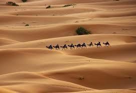 Desierto de Rajastan India  Con Gre y Damian la aventura de mi vida!