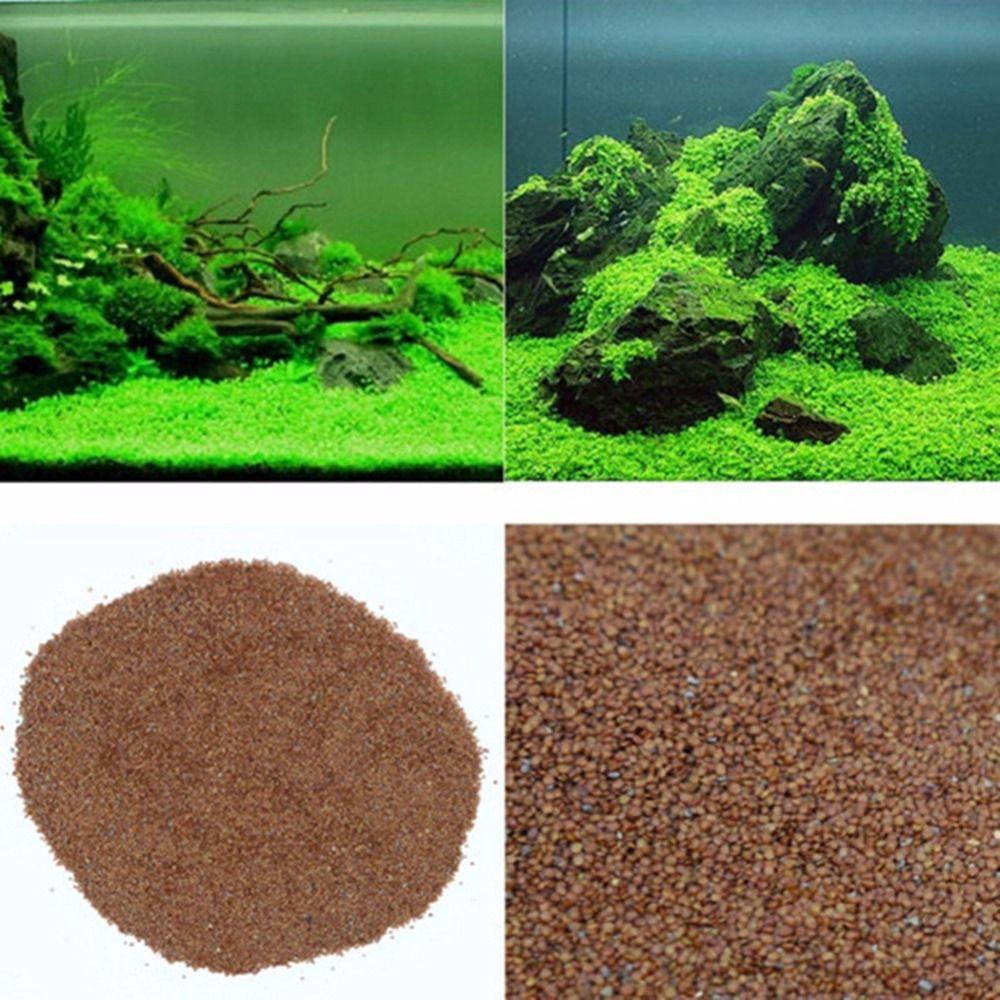 Nicrew glossostigma hemianthus callitrichoides nasiona trawy wody