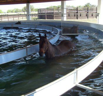 """I want one of these! an aquatic horse exercise machine, and is still one of only two in this country. Designed and sold by IronGate Australia, the pool has room for six horses, and Vinery horses daily get in for a little exercise. The trainer running the pool explains that it's not for swimming: """"The water comes up only to their chests, not enough for them to be able to float. They've got to keep their feet on the ground."""" In general, the horses walk for five minutes, jog for seven, and walk…"""