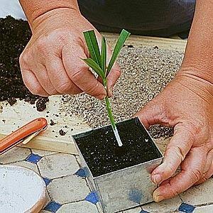 le calendrier pour bouturer les fleurs et arbustes d 39 ornements plantes pinterest jardins. Black Bedroom Furniture Sets. Home Design Ideas