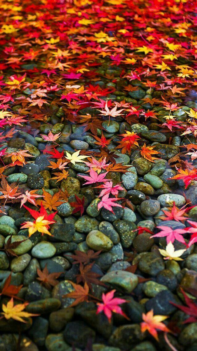 Multicolor leaves Осенние картинки, Осенние изображения