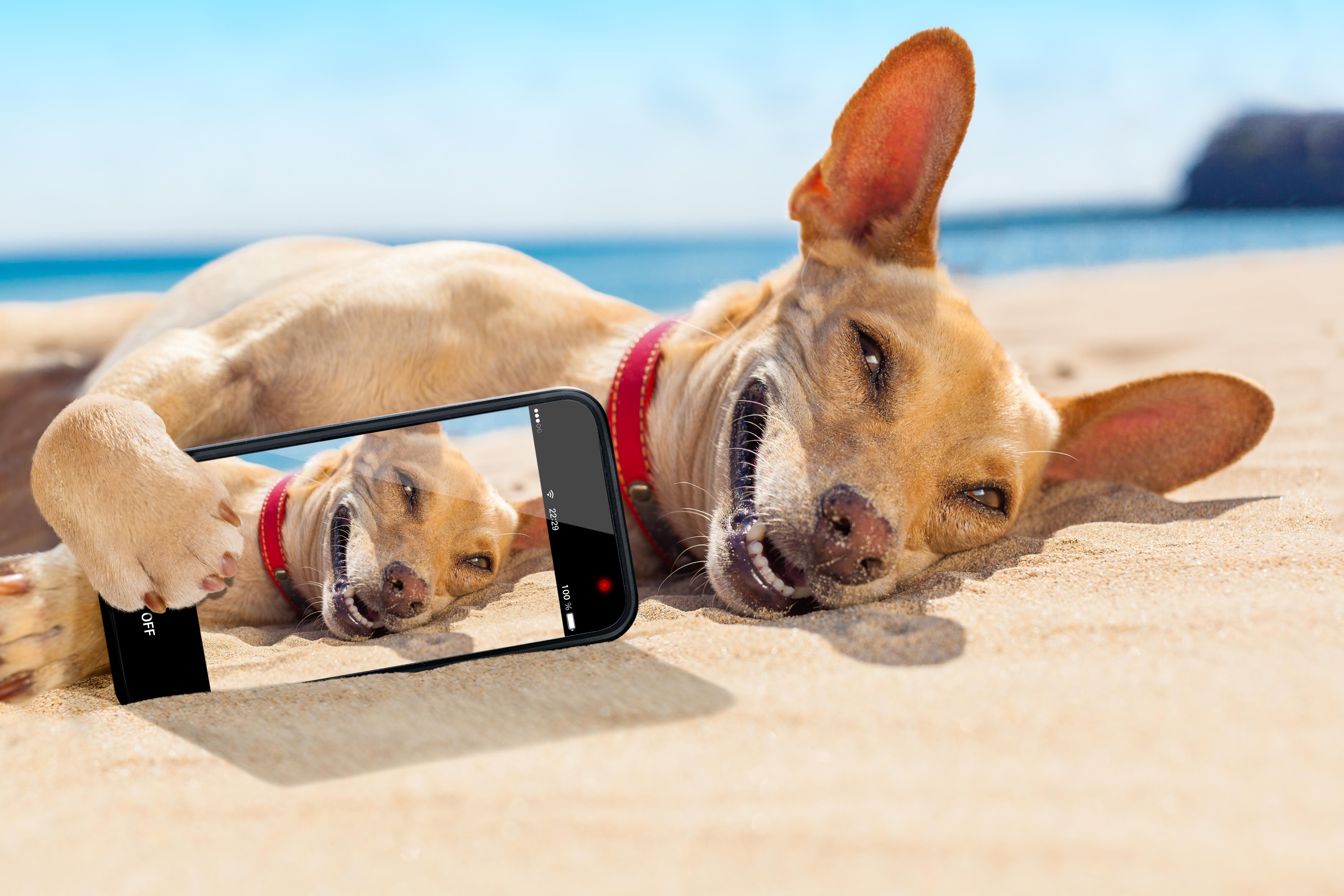21564756c09 These Dogs Sum Up Your Holiday Vibes