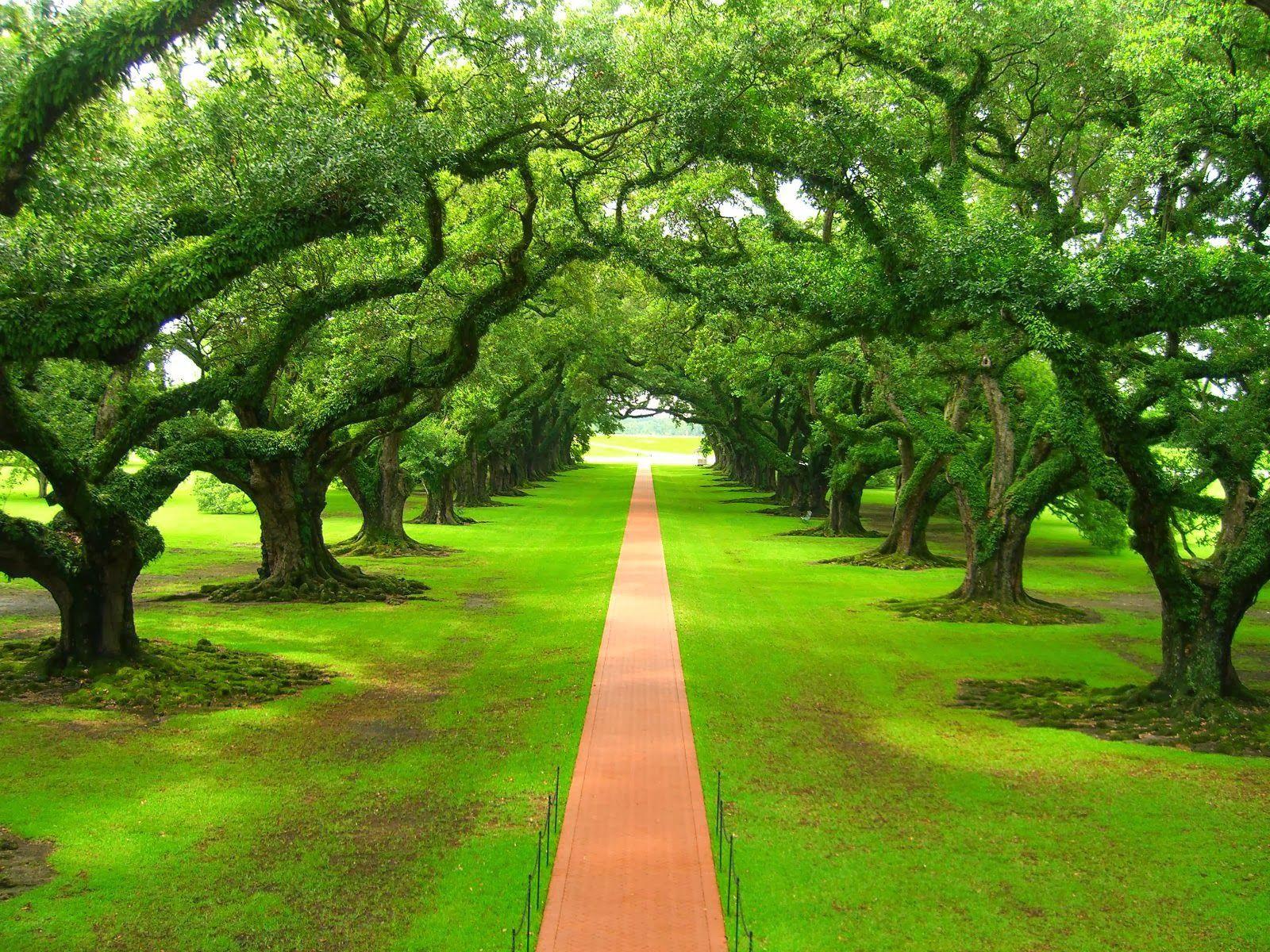 Nature Walkways Wallpapers Beautiful Nature Green Nature Beautiful Tree