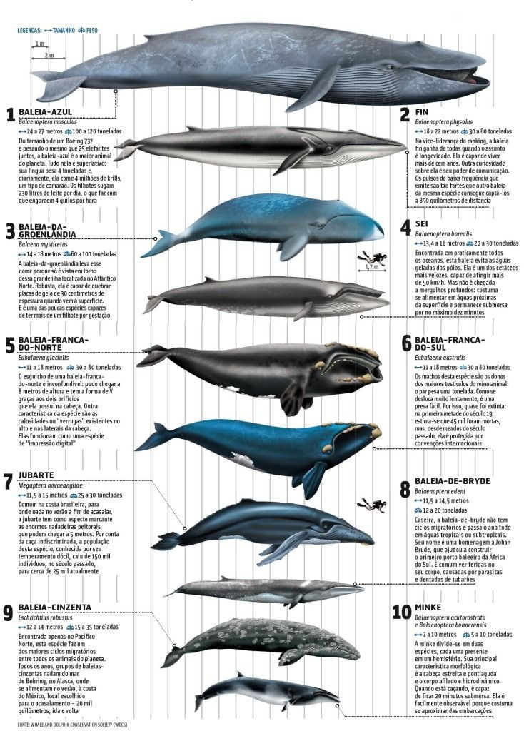 Whales Infographic Source Wds Com Imagens Mamiferos