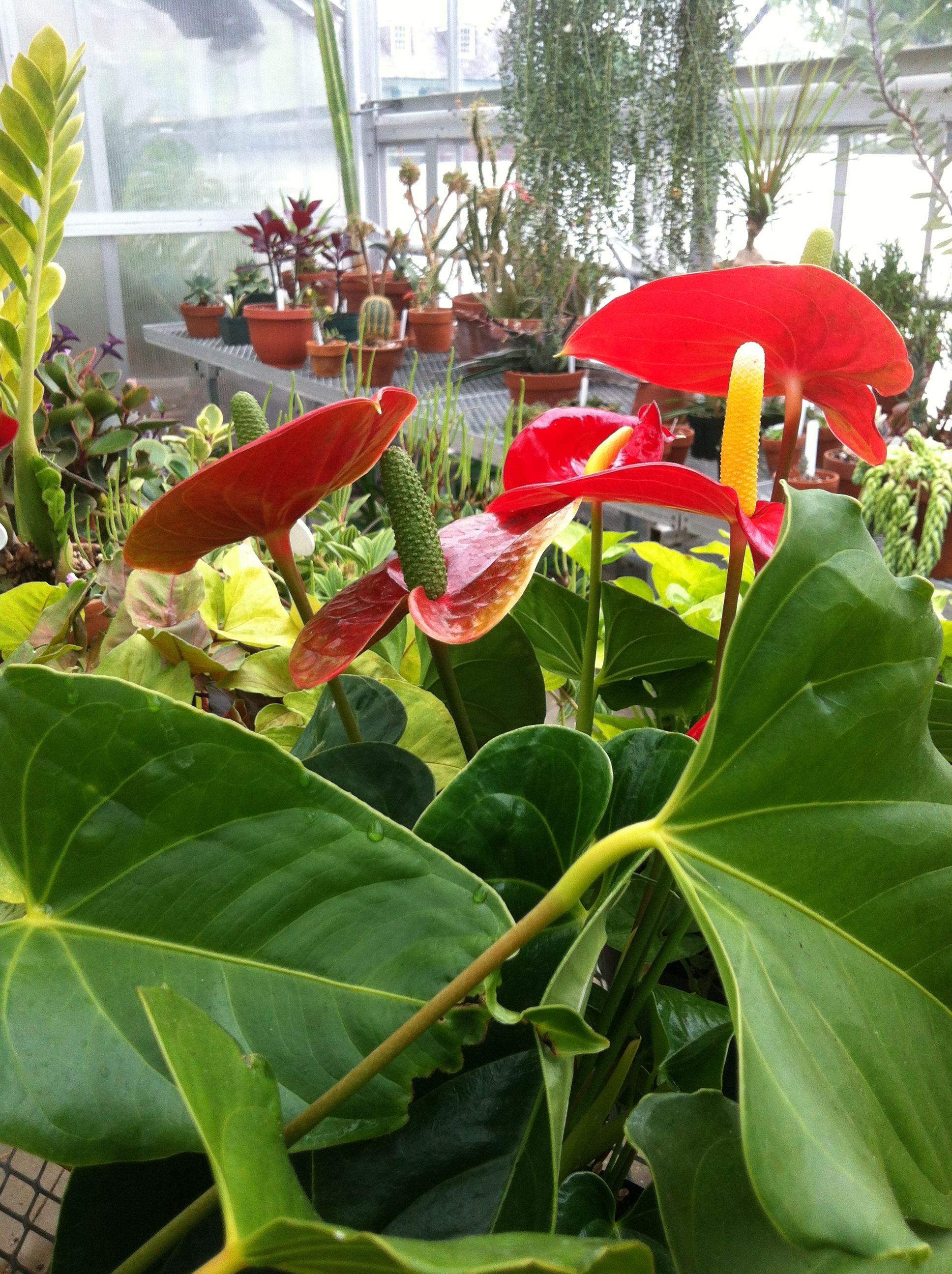 #barnesfoundation #plantsale