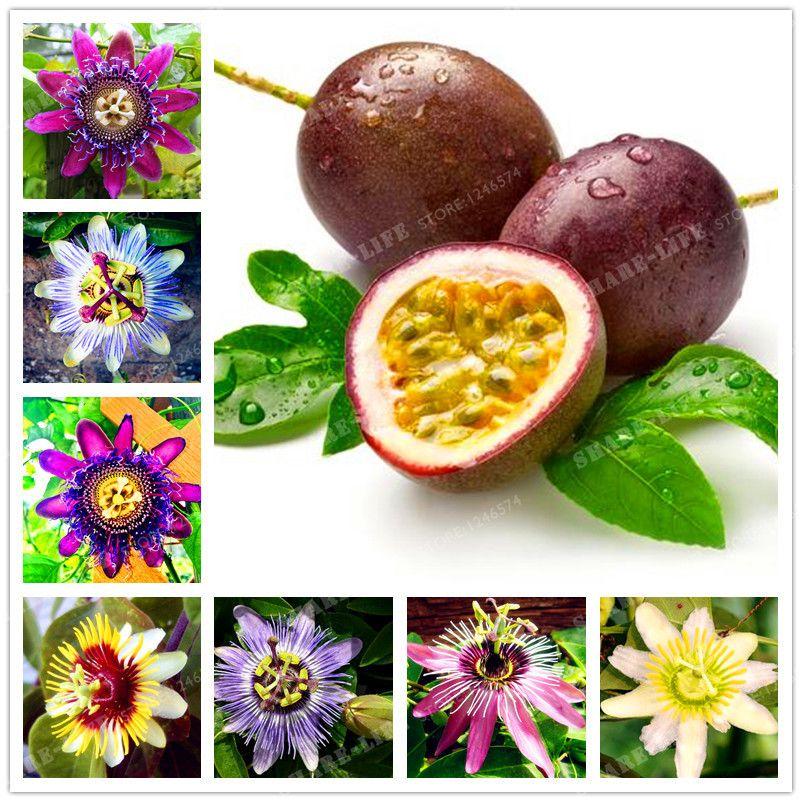 50pcs Passion Fruit Seeds Passiflora Fruit Vine Fruit Passiflora Caerulea Seeds