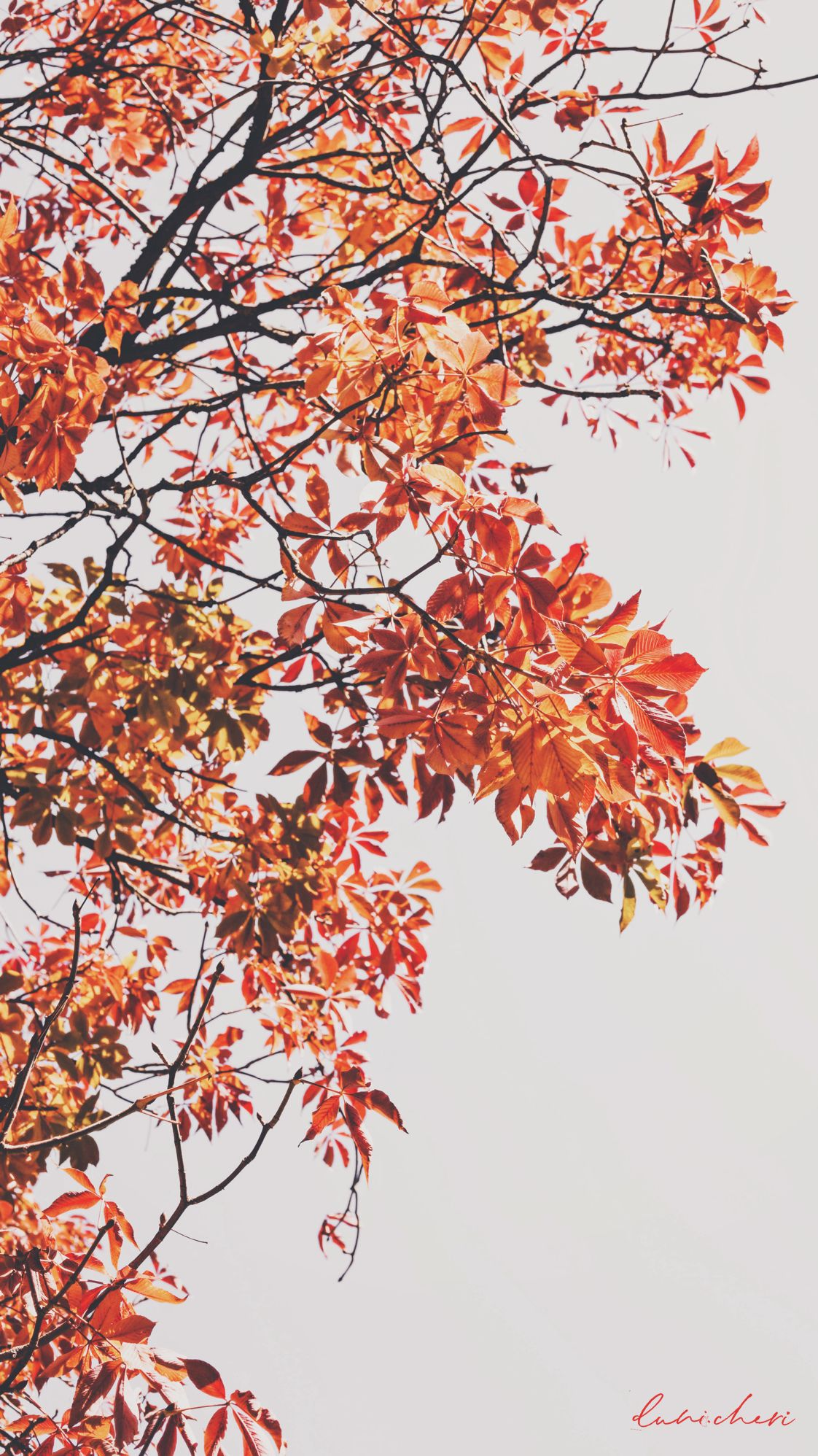 Free Download: Autumn Wallpaper ♥ Desktop & Mobile #fallwallpaperiphone