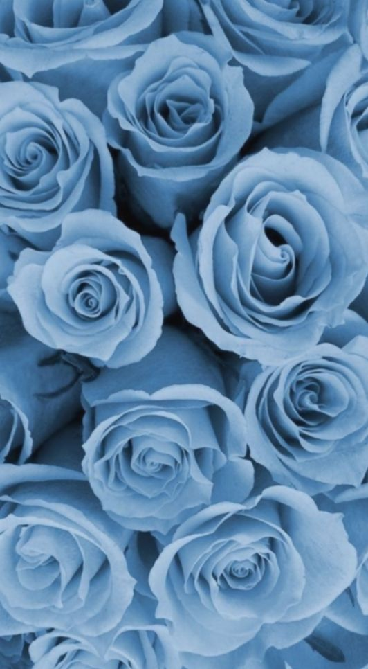 Cute Aesthetic Blue Wallpaper Ilhadogovernador Acfotografia Aderitacristina Blue Roses Wallpaper Blue Wallpaper Iphone Aesthetic Iphone Wallpaper