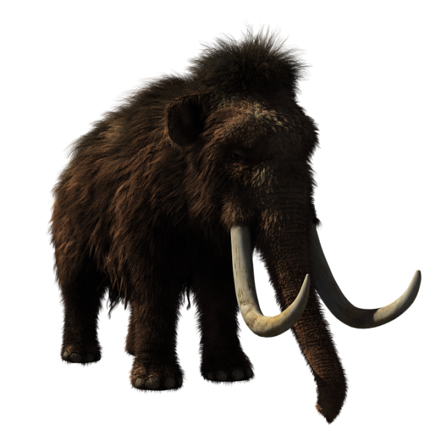 DeExtinction of the Woolly Mammoth U.S. and Korea in