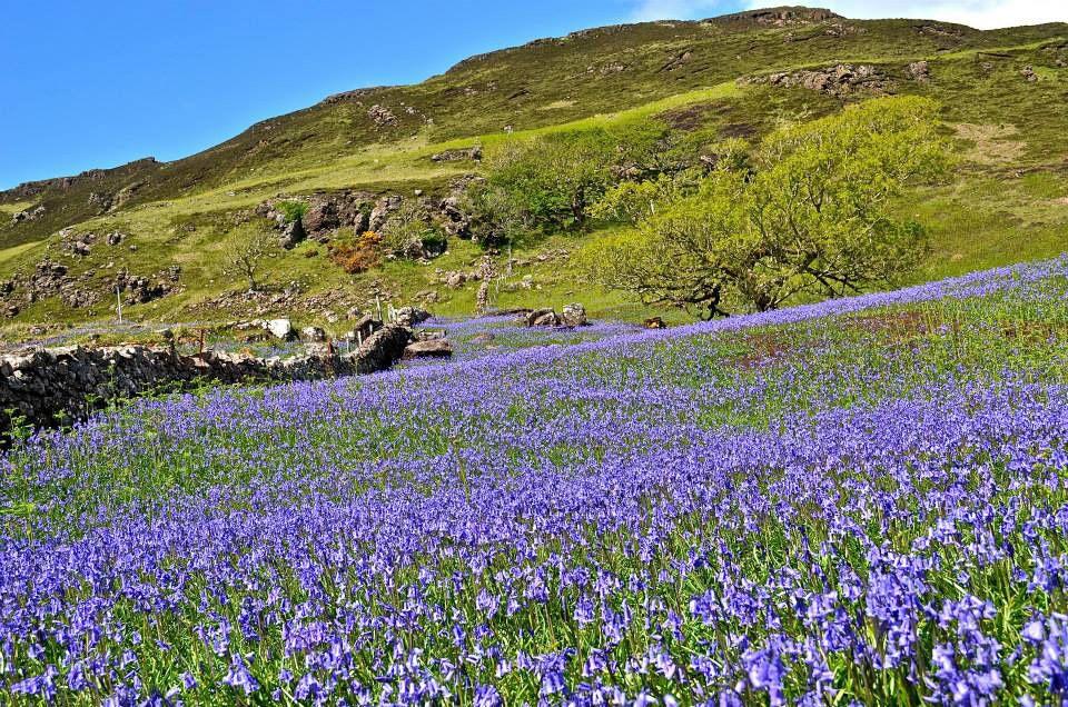 Killiechronan - Isle of Mull - Scotland.