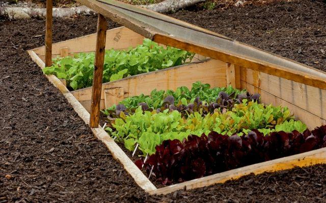 Fantastisch Bildergebnis Für Gemüsebeet Anlegen Beispiele