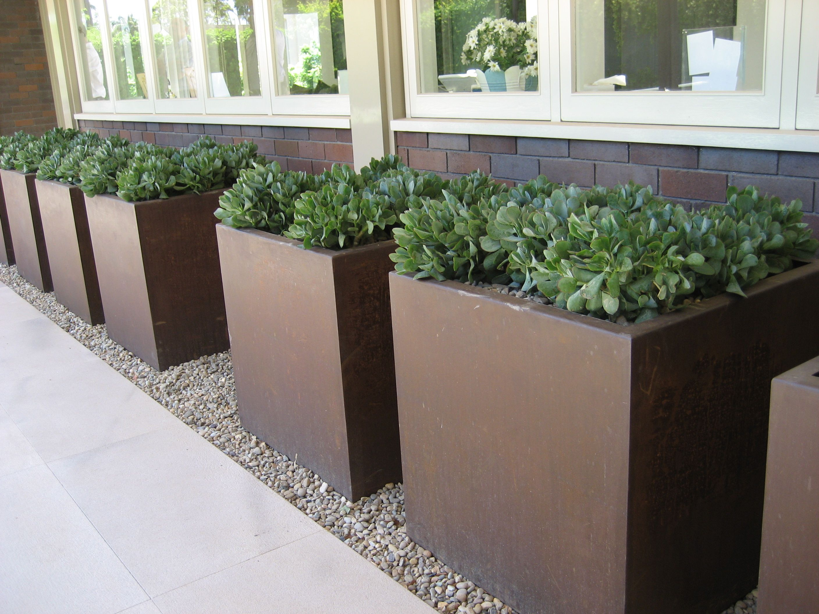 Large square planters with succulents simple and stunning sydney