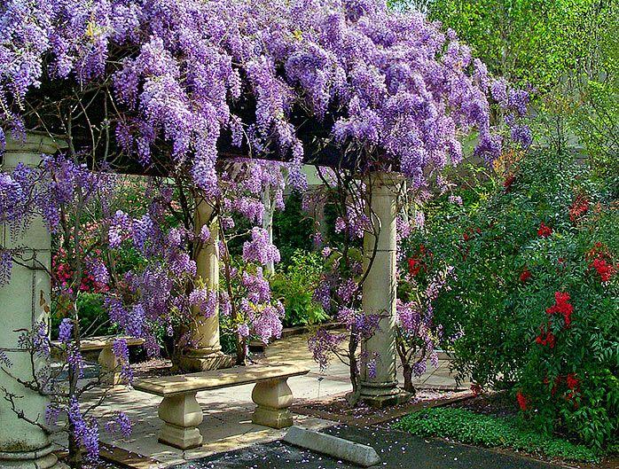 Climbing Plants An English Gardener In The Philippines Magical Garden Wisteria Arbor Dream Garden