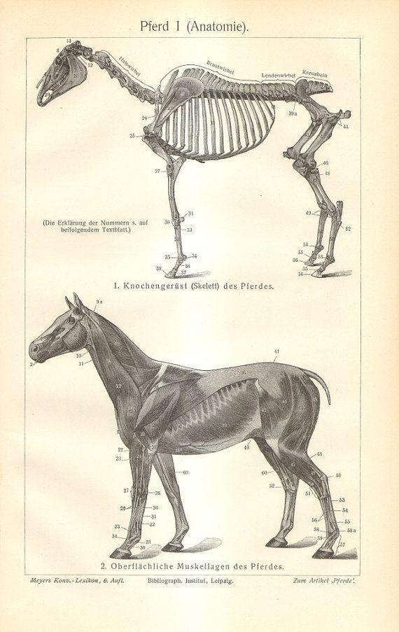 1894 Prehistoric Deer Wooly Mammoth Dinosaurs Antique Print Natural ...