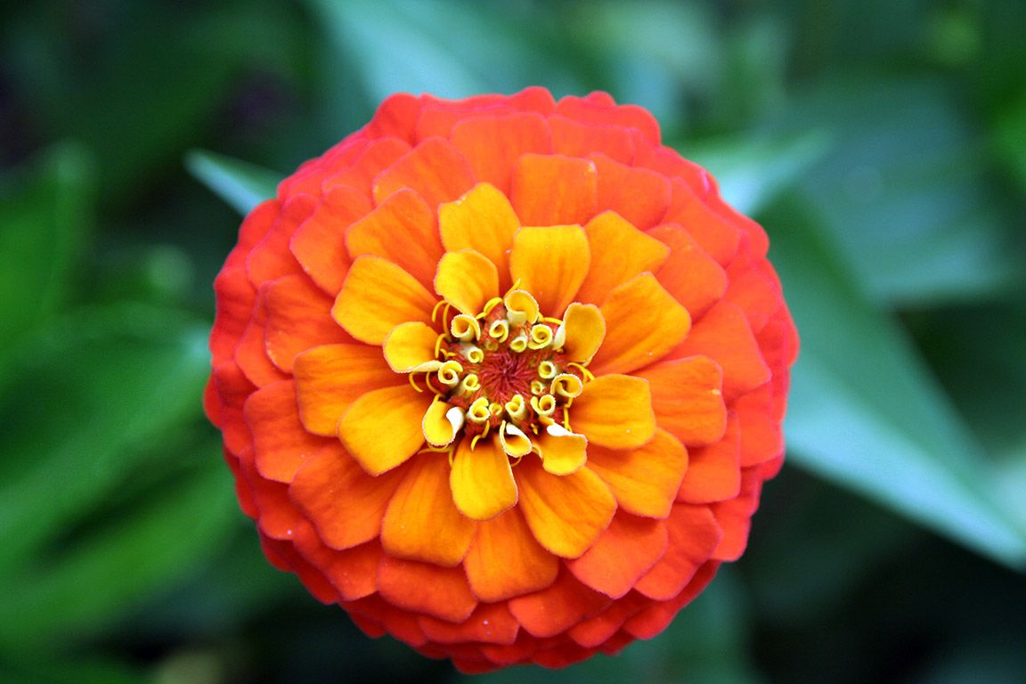 superb orange and yellow flowers Part - 1: superb orange and yellow flowers nice design