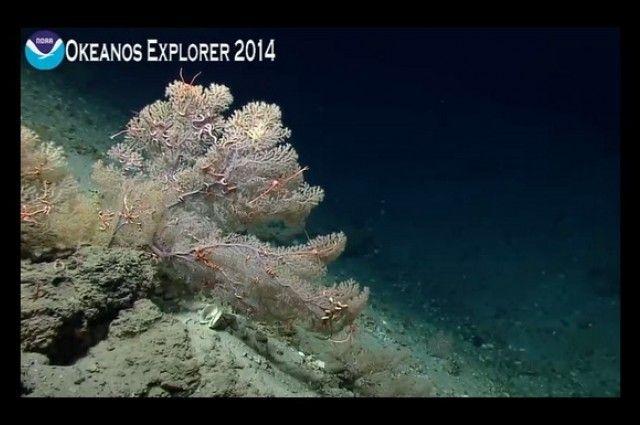 Misterio y Ciencia Hoy: Explore el fondo oceánico desde la comodidad de su...
