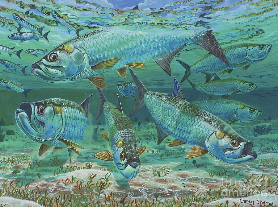 Tarpon Fly fishing art, Art, Fish art