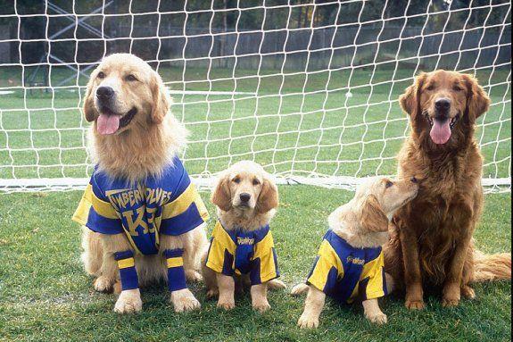 Rin Tin Tin Dogs I Love Dogs Air Buddies Movies