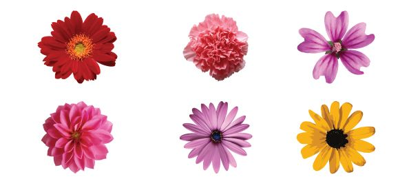 how to make a realistic flower in illustrator