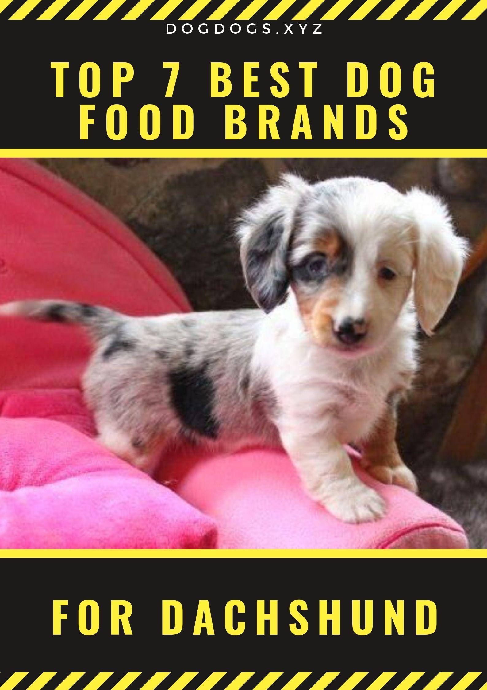 Top 7 Best Dog Food Brands For Dachshund Best Dog Food Brands
