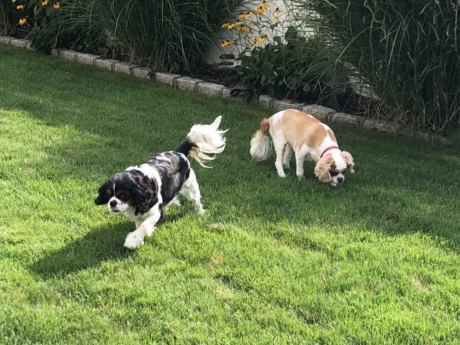 Pin By Becca Beal On Suburban Paws Pet Care Long Island Pet