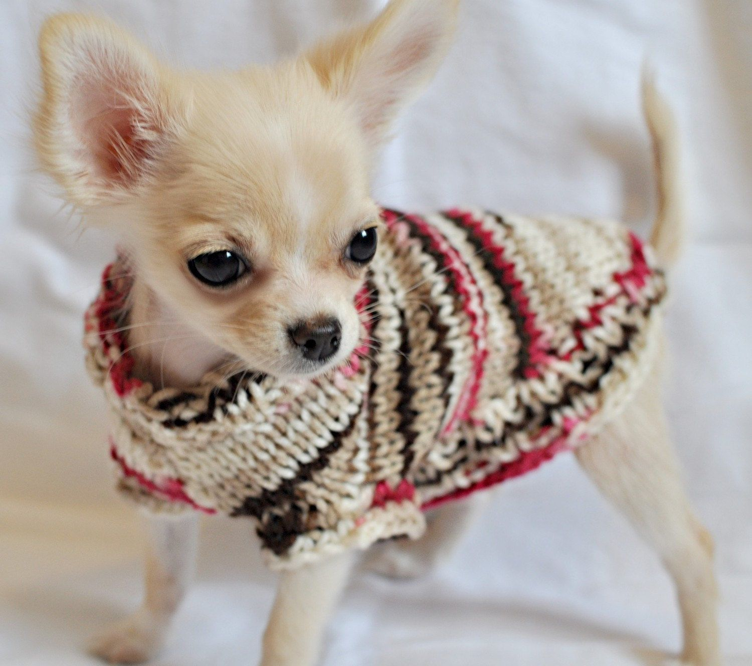 Too Cute Like The Colors In This Doggie Sweater Chihuahua
