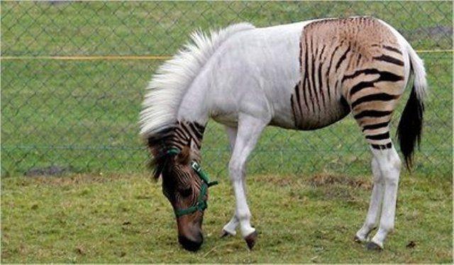 Ten Strange Animal Hybrids Rare Animals Horses Unusual Animals