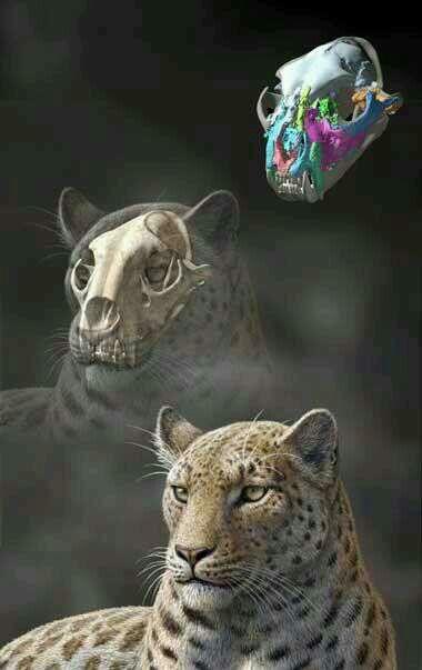 Leopardo de las nieves (fosil) | Animales | Pinterest | La nieve ...