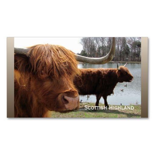 Scottish Highland Cattle Biz Card Zazzle Com Highland Cattle