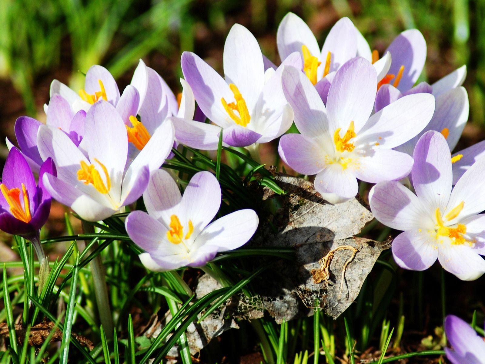 BANCO DE IMAGENES GRATIS: 12 Fotos De Flores Preciosas En