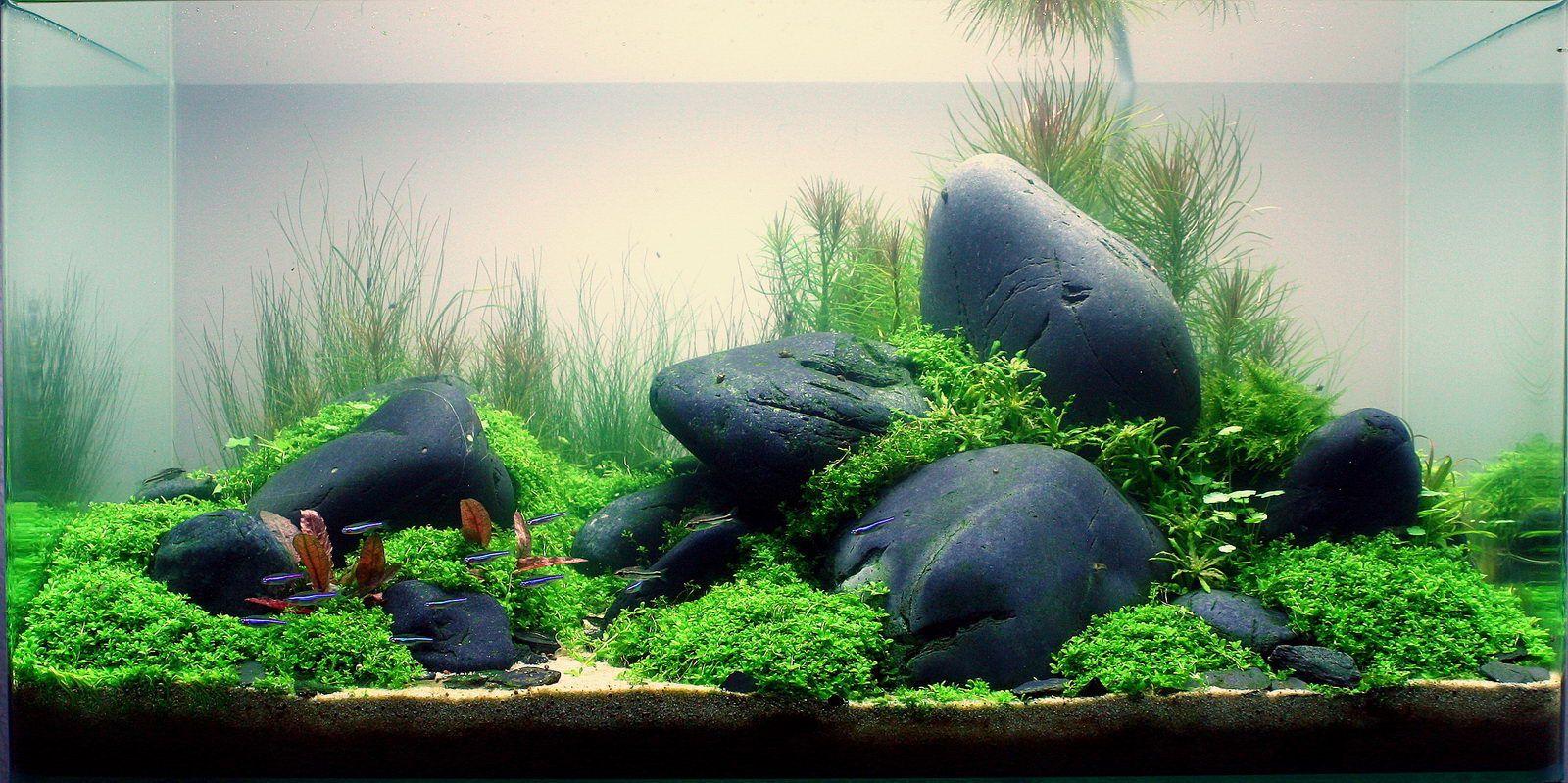 black river rock aquarium | share | Freshwater | Aquarium ...