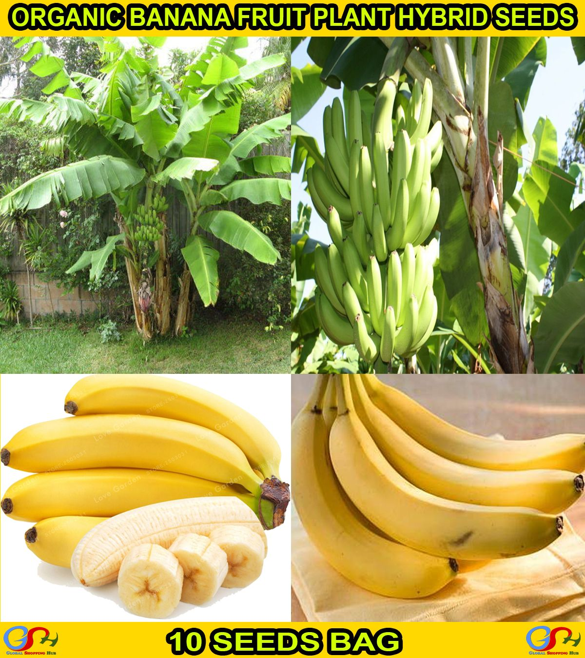 Fresh Imported Organic Banana Fruit Plant Hybrid Seeds 10 Seeds Bag In 2020 Fruit Plants Banana Fruit Seeds