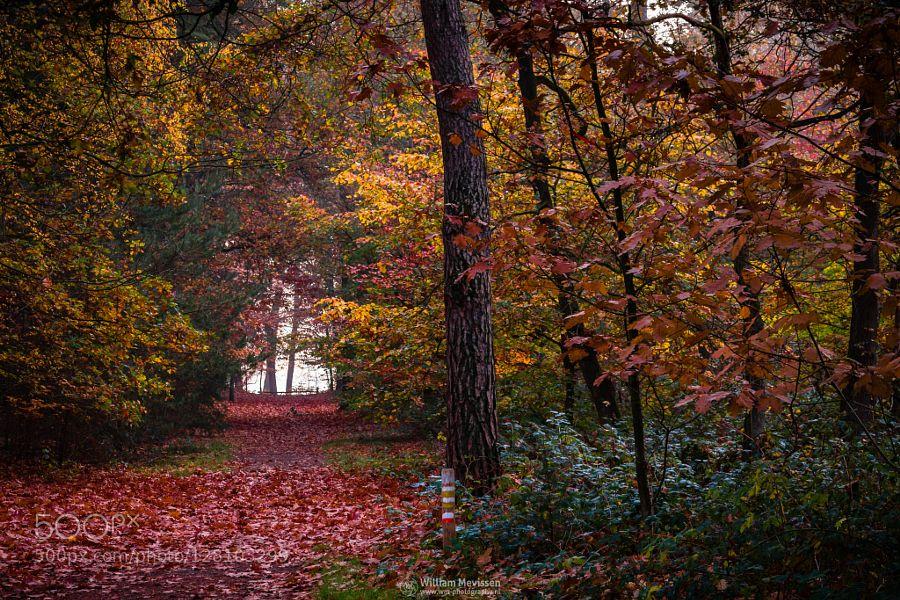 Autumn Palette Autumn Palette on a misty autumn morning before sunrise at estate 'Landgoed Geijsteren' (Geijsteren Noord-Limburg Netherlands). If you like my work you can also follow me at facebook instagram twitter and pinterest :)