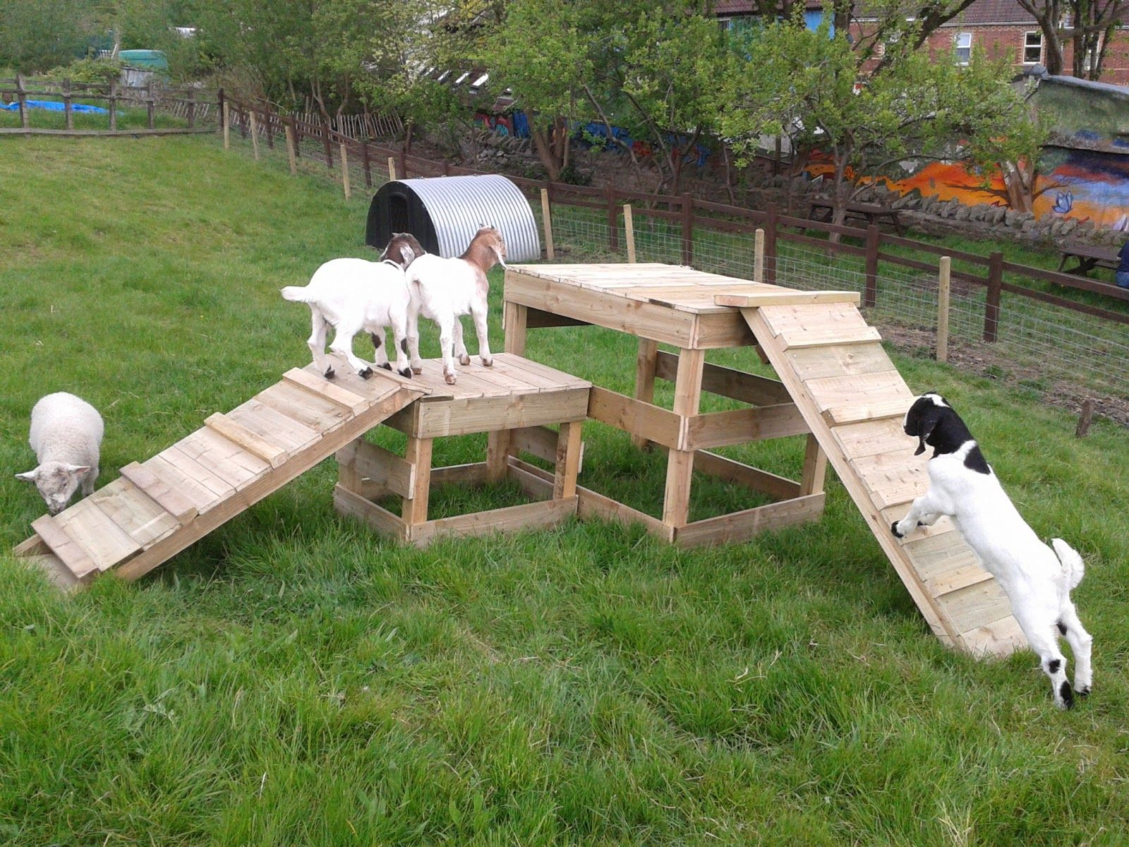 Seesaw 2 Goat Bridges 3 Goat Tower 4 Tires 5 Stairs 6 Stairs And Tunnels 7 Platforms In 2020 Goat Playground Goat House Goat Shelter